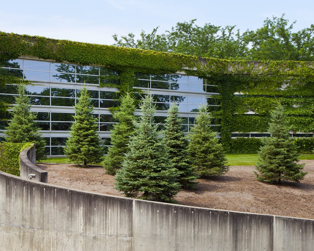 An ivy-covered glass facade with pine trees in the foreground.